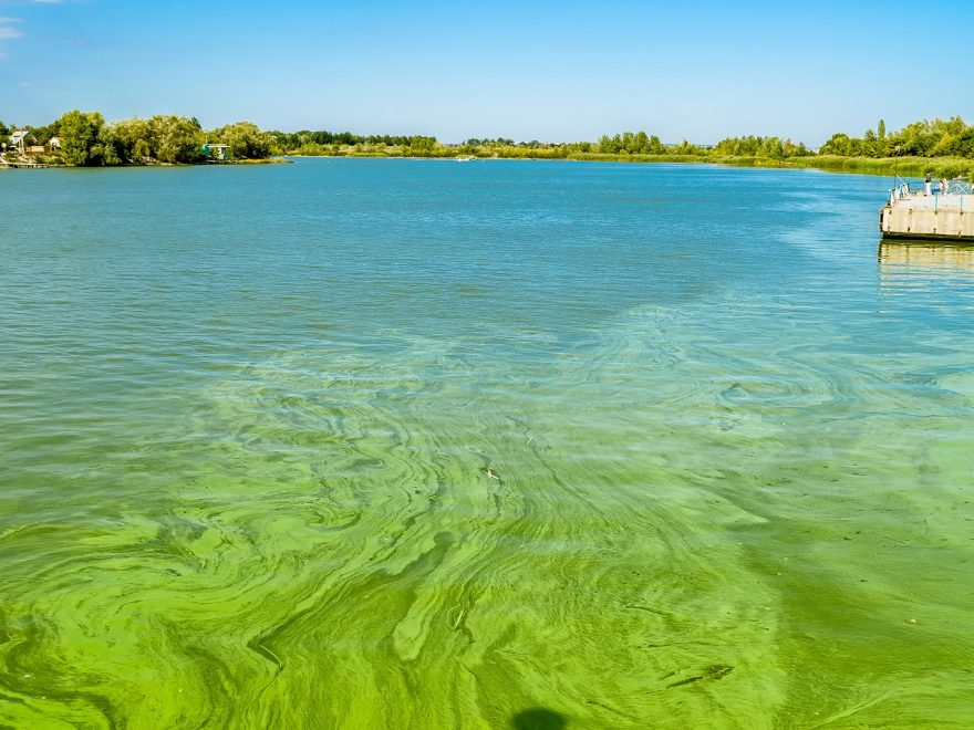 State One Step Closer to Addressing Algae Problems